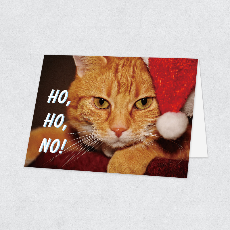 Funny Grumpy Cat Holiday Photo Card PBHAL020